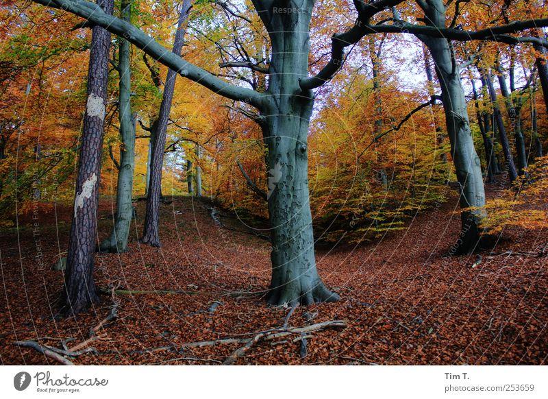 Heiliger Ort Natur Baum Blatt Wald Herbst Umwelt Landschaft Erde Wandel & Veränderung Urelemente Urwald