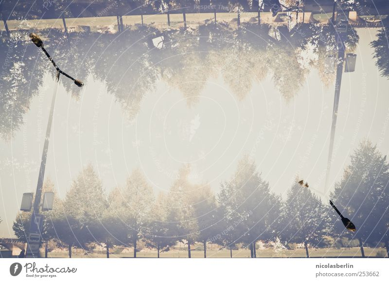 B@DD 11 | Wie im Himmel so auf Erden Himmel Natur Baum Pflanze Ferien & Urlaub & Reisen Leben Wiese Umwelt oben Lampe Park Erde Ausflug verrückt Wachstum authentisch