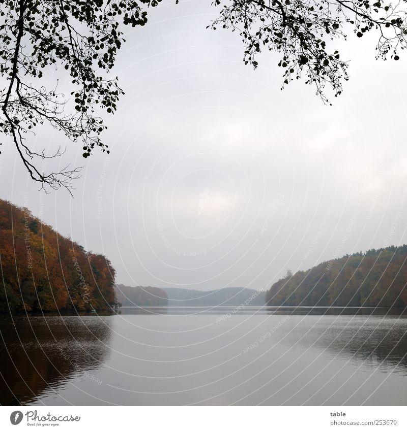 das wars dann... Umwelt Natur Landschaft Pflanze Luft Wasser Himmel Wolken Herbst Klima Wetter Nebel Baum Wildpflanze Wald Seeufer Flussufer Bucht Fjord dunkel