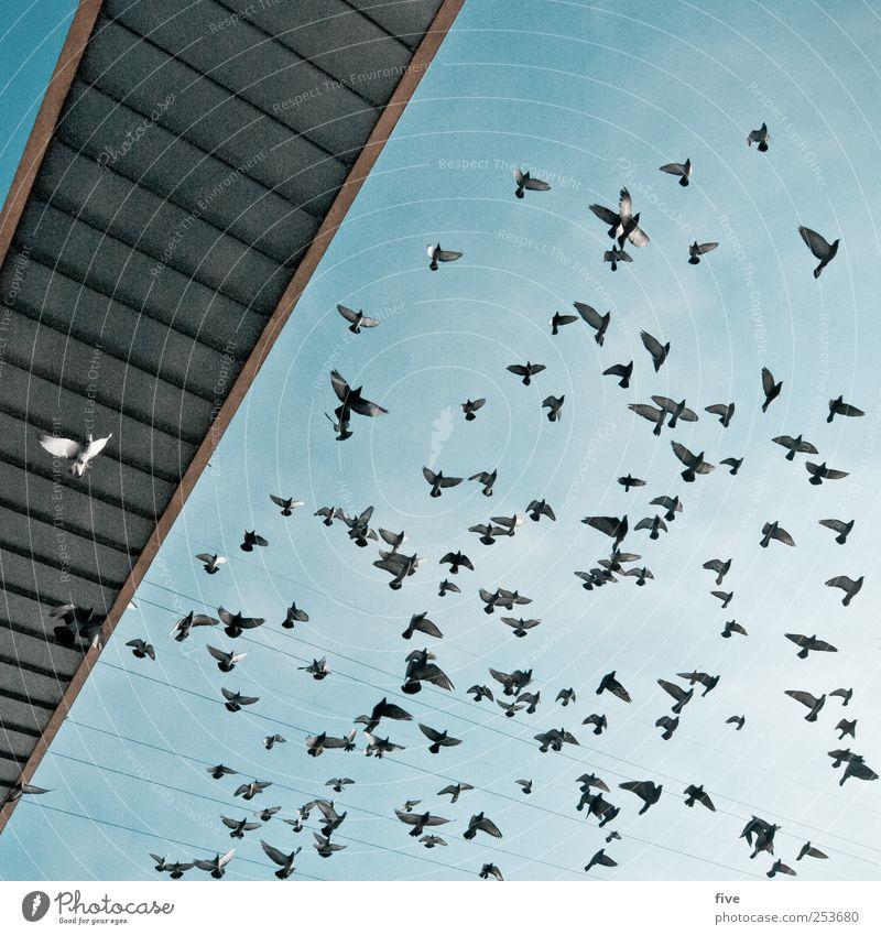 Auf nach Wien Himmel Natur Ferien & Urlaub & Reisen Tier Vogel fliegen Ausflug Abenteuer Brücke Tiergruppe Bauwerk Schönes Wetter Sightseeing Wolkenloser Himmel