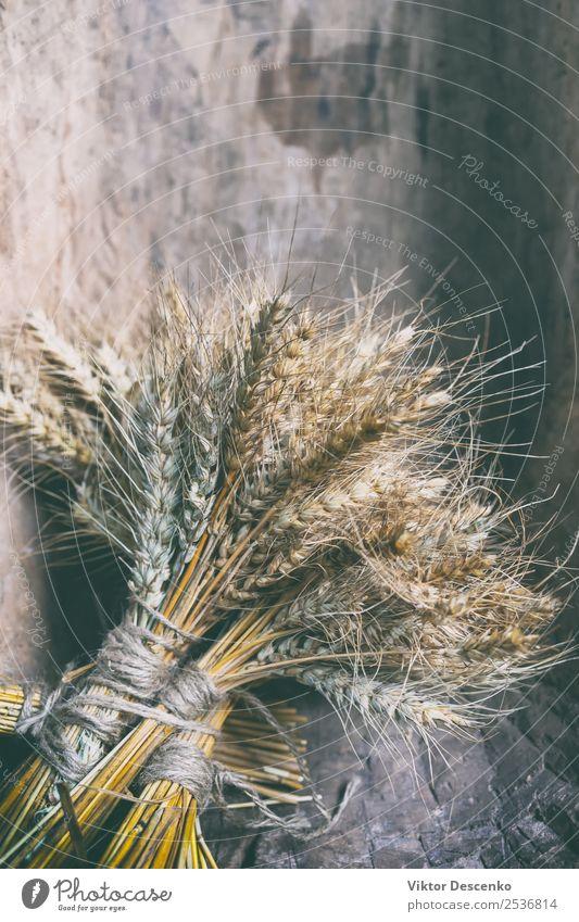 Ährenbündel von Getreidepflanzen Brot Design Sommer Sonne Dekoration & Verzierung Natur Pflanze Blumenstrauß Sammlung natürlich gelb gold Hintergrund