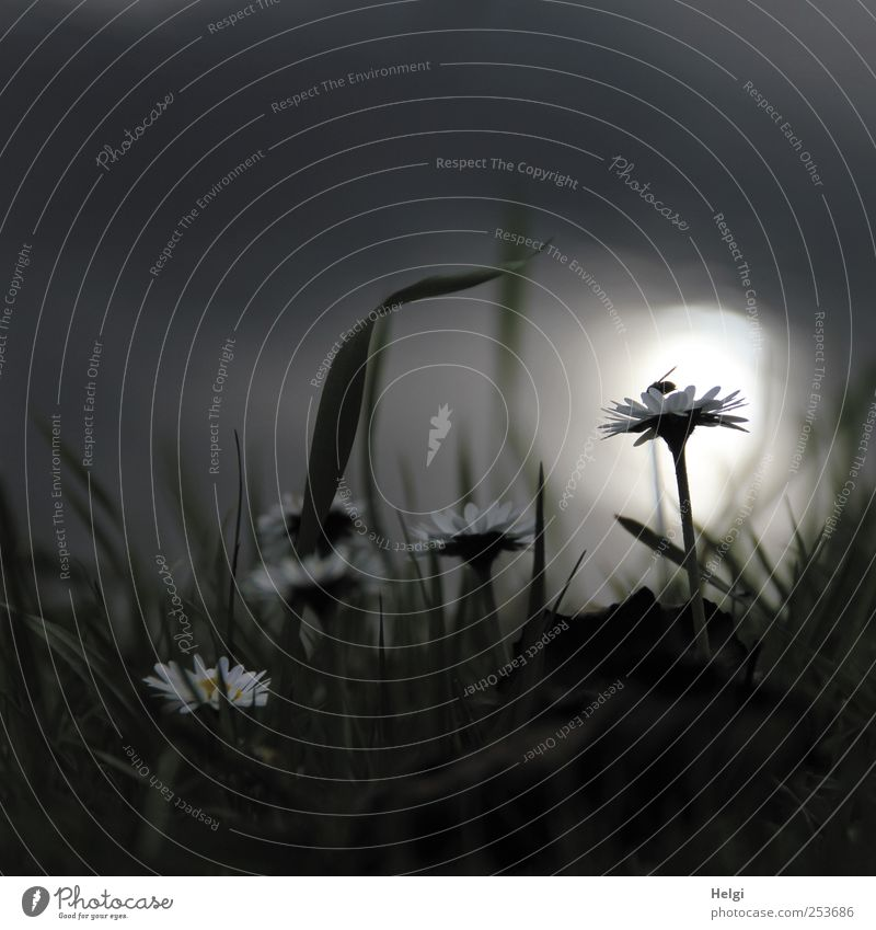 im Licht... Umwelt Natur Pflanze Sonnenlicht Herbst Nebel Blume Gras Blüte Wildpflanze Gänseblümchen Wiese Küste Bach Fliege Blühend krabbeln leuchten Wachstum