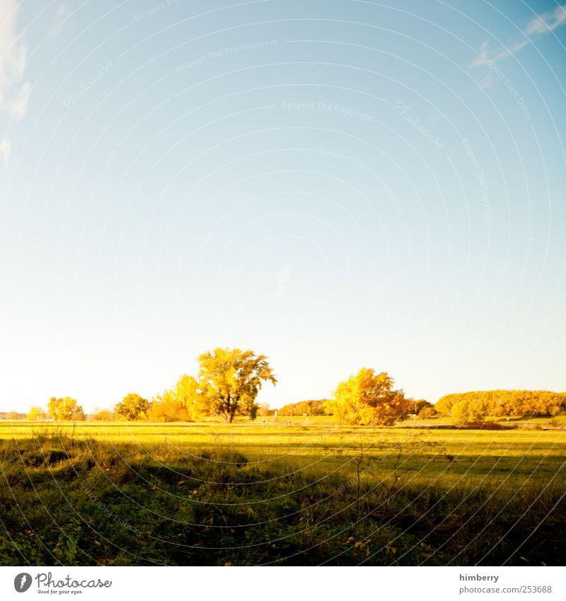 autumn weather Landwirtschaft Forstwirtschaft Kunst Umwelt Natur Landschaft Pflanze Sonnenaufgang Sonnenuntergang Sonnenlicht Sommer Herbst Klima Klimawandel