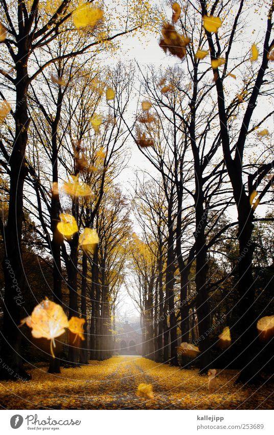 sein letzter fall Pflanze Baum Blatt Herbst Wege & Pfade Tod Park Nebel Kirche Vergänglichkeit Trauer fallen Ende Dunst Herbstlaub Friedhof
