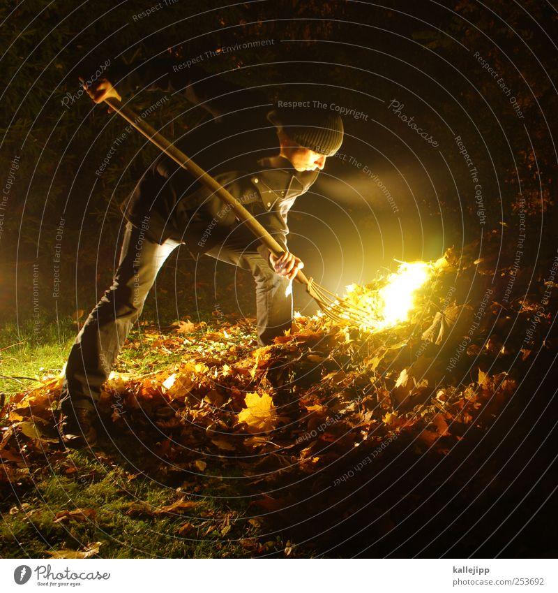 blattgold Mensch Mann Natur Baum Blatt Erwachsene Umwelt Wiese Herbst Garten Park Beleuchtung Arbeit & Erwerbstätigkeit maskulin Gold Suche