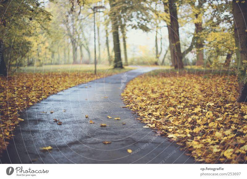 Herbstweg Asphalt Wege & Pfade Fußweg Baum Blatt Park Straßenbeleuchtung Beleuchtung