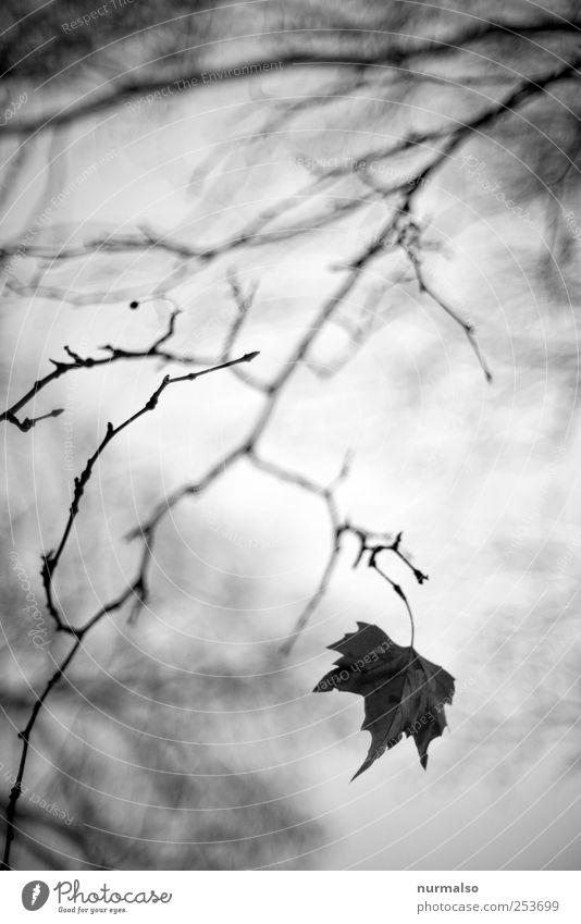 das letzte Lifestyle Kunst Natur Pflanze Tier Blatt Park Wald hängen verblüht dehydrieren dunkel Stimmung träumen Vergänglichkeit Ast Herbst wirrwar Unschärfe