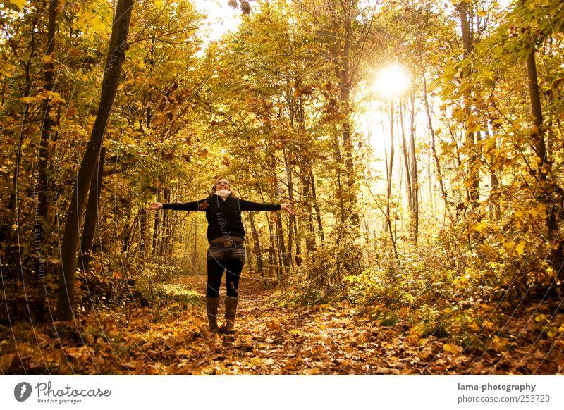 Goldene Zeiten Freude 1 Mensch Sonnenlicht Herbst Blatt Herbstlaub Herbstlandschaft Herbstwald lachen Fröhlichkeit gelb gold Glück herbstlich Sonnenstrahlen