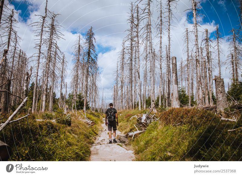 Geisterwald Ferien & Urlaub & Reisen Tourismus Ausflug Abenteuer Expedition Sommer Sonne wandern Mensch maskulin Junger Mann Jugendliche Erwachsene 18-30 Jahre