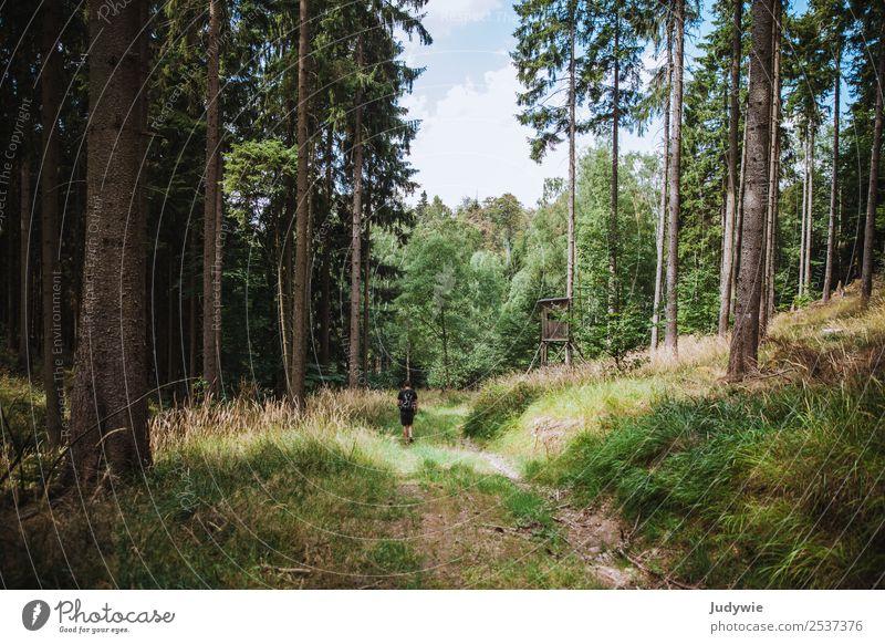 Am Hochsitz Erholung ruhig Ferien & Urlaub & Reisen Ausflug Abenteuer Expedition Camping Sommer wandern maskulin Mann Erwachsene Umwelt Natur Herbst