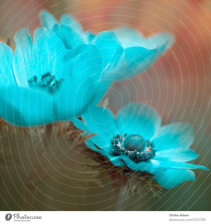 Hellblaue Garten Anemone - Blumen und Natur elegant Stil Design Wellness Leben harmonisch Wohlgefühl Zufriedenheit Erholung ruhig Meditation Kur Spa Schwimmbad
