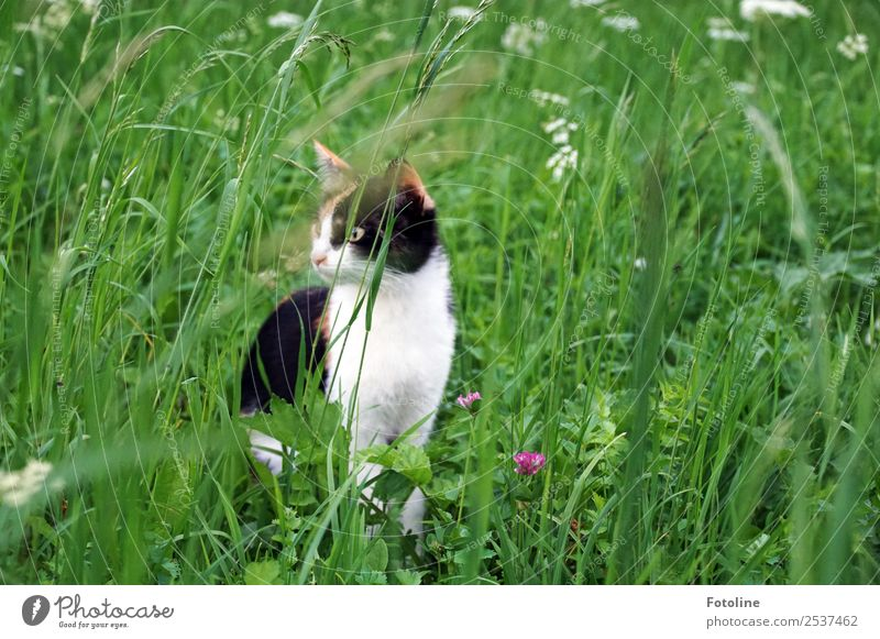Miezi Umwelt Natur Landschaft Pflanze Tier Sommer Blume Gras Blüte Garten Park Wiese Haustier Katze Tiergesicht Fell 1 grün schwarz weiß Wachsamkeit beobachten