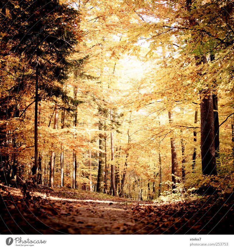 Türbild Herbst Wald Wege & Pfade braun gelb gold ruhig Wandel & Veränderung Buchenwald Blatt Farbfoto Gedeckte Farben Außenaufnahme Menschenleer Sonnenlicht
