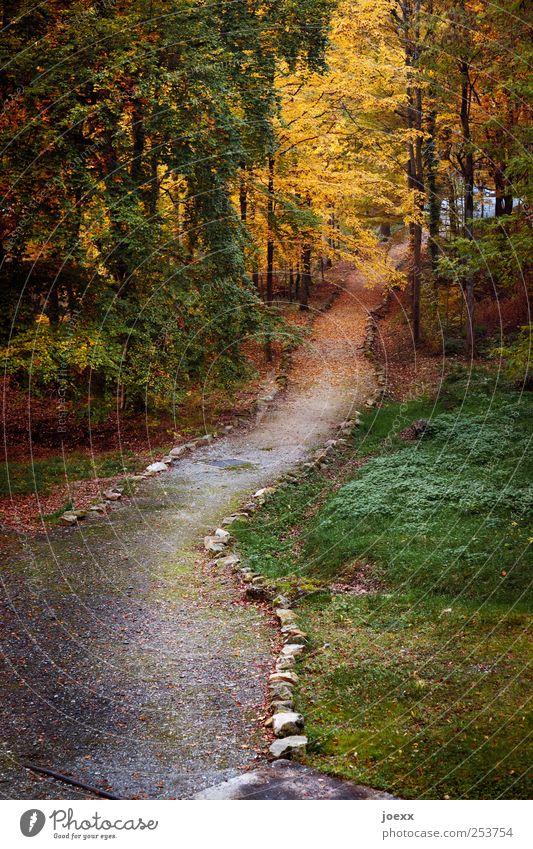 Der letzte Weg Natur Erde Herbst Baum Wald Wege & Pfade alt braun gelb grau grün rot Wandel & Veränderung Herbstwald Bordsteinkante Farbfoto mehrfarbig
