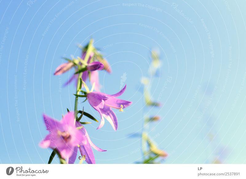 Blumen im Morgengrauen Lifestyle Freude Wellness Leben harmonisch Wohlgefühl Zufriedenheit Sinnesorgane Erholung ruhig Meditation Umwelt Natur Landschaft