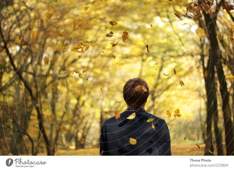 Blatt für Blatt Mensch Natur Baum Blatt gelb Herbst Bewegung gold beobachten Idylle Gelassenheit Herbstlaub herbstlich Herbstfärbung Herbstwald Herbstlandschaft