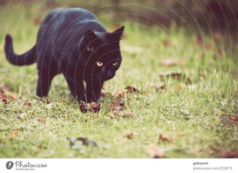 Schwarze Katze von links Natur grün Tier schwarz Tierjunges Umwelt Wiese Wege & Pfade Beginn Lebensfreude beobachten niedlich Neugier entdecken Fell