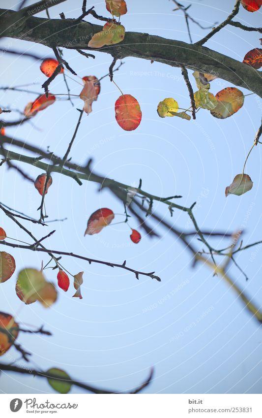 Windspiel Umwelt Natur Pflanze Luft Himmel Wolkenloser Himmel Herbst Klima Schönes Wetter Baum Grünpflanze Holz hängen gelb Vergänglichkeit Wandel & Veränderung