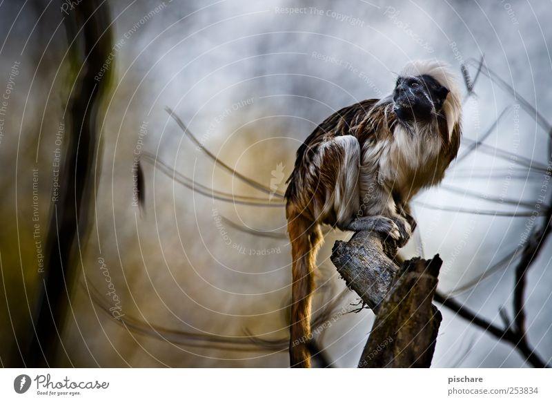 gestatten, *princessa* Natur Baum Tier sitzen wild beobachten Neugier Zoo exotisch Affen Schüchternheit