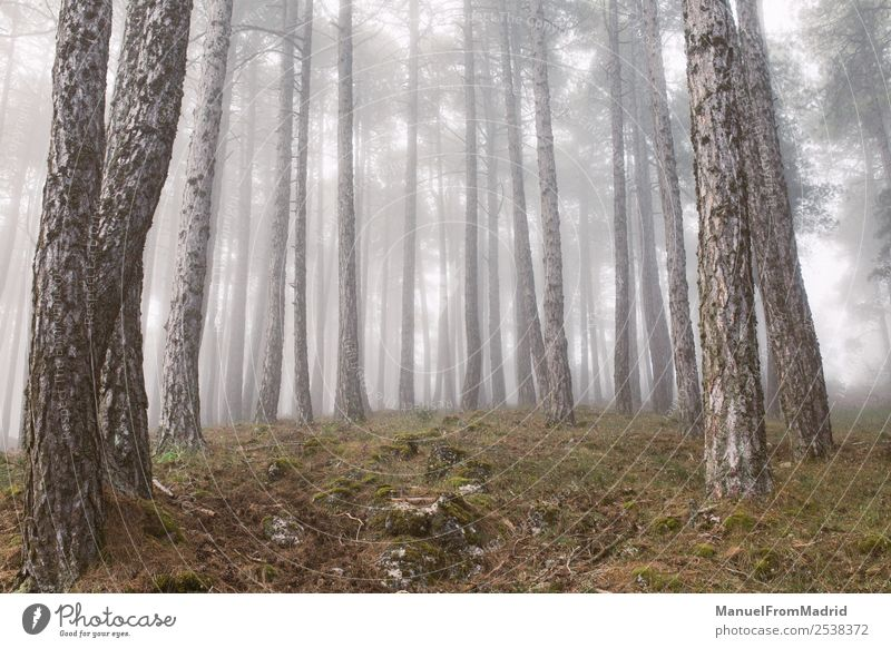 Bäume im magischen Nebelwald Sonne Umwelt Natur Landschaft Herbst Wetter Regen Baum Blatt Wald wild schwarz Stimmung ästhetisch Zufriedenheit Einsamkeit