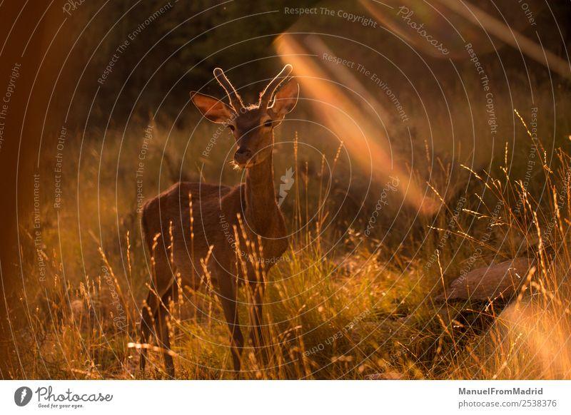 Junge Zervus Damhirsche schön Spielen Berge u. Gebirge Frau Erwachsene Umwelt Natur Tier Baum Wald Pelzmantel Tierjunges wild grün Beautyfotografie Biologie