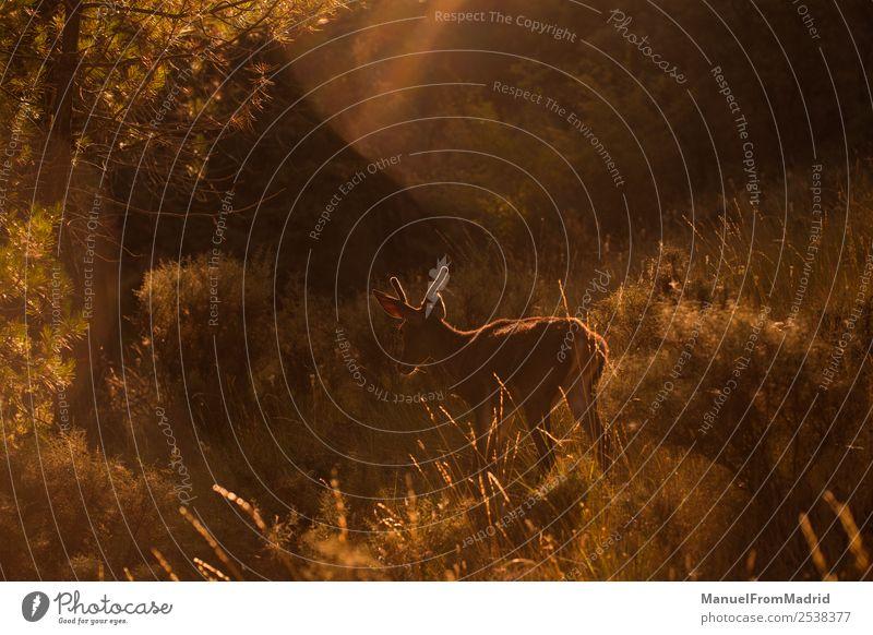Junge Zervus Damhirsche Tier Hintergrund schön Beautyfotografie Biologie Damwild Dama Hirsche Hirschkuh Umwelt Frau Wald Pelzmantel Spielen grün Pflanzenfresser