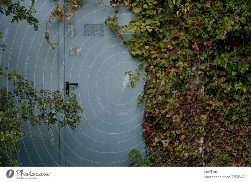 verwunschen Natur Tür natürlich Efeu Ranke Verhext Märchen Unbewohnt Herbst Farbfoto Außenaufnahme bewachsen