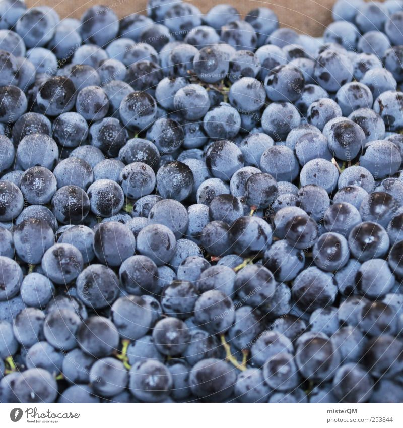 Weinlese. Lebensmittel ästhetisch blau Weintrauben Weinbau viele Frucht reif Beeren Farbfoto Außenaufnahme Nahaufnahme Muster Menschenleer Textfreiraum links