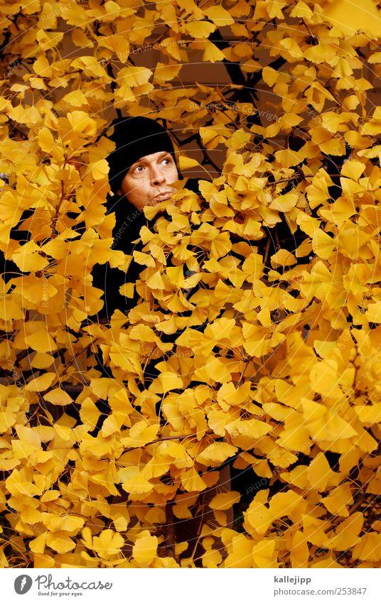 yellow press Mensch Mann Natur Baum Pflanze Blatt Tier Wald gelb Herbst Umwelt Erwachsene Kopf Garten Park maskulin