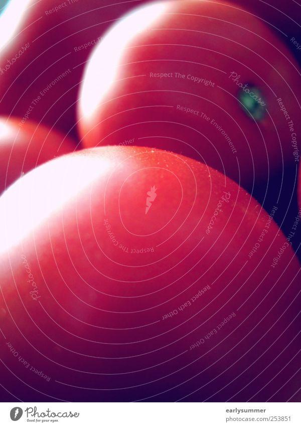 Tomaten Lebensmittel Gemüse Ernährung Frühstück Bioprodukte Vegetarische Ernährung Gastronomie Natur Sommer Klima Klimawandel Nutzpflanze Garten Duft frisch
