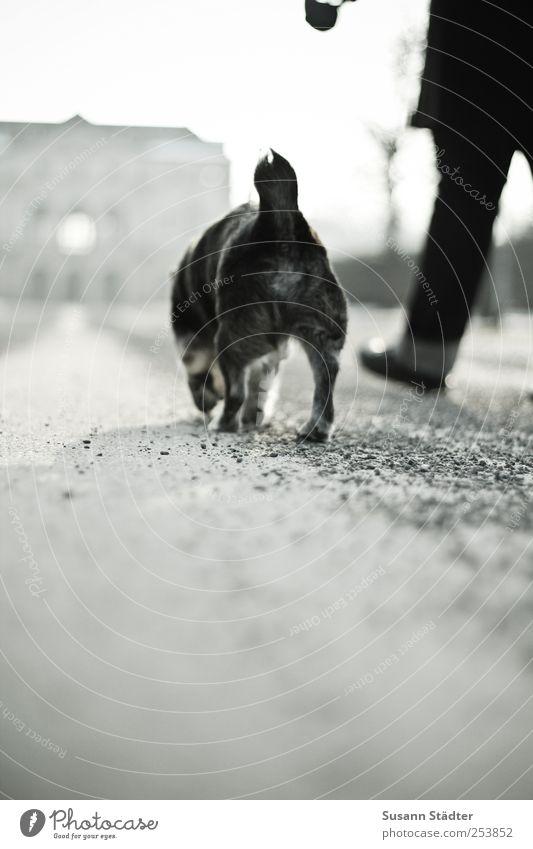 Seniorenbetreuung Hund Winter Tier Beine Park Freundschaft laufen Hilfsbereitschaft Spaziergang Burg oder Schloss Partner Haustier Hundeleine gehen Rückansicht