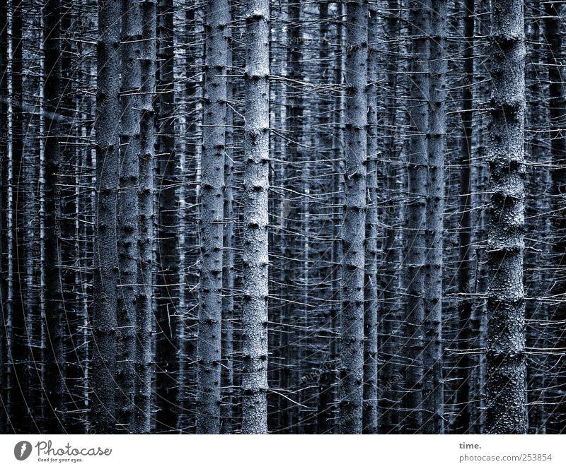 Vollharz Baum Pflanze Wald dunkel Umwelt Holz geschlossen Klima bedrohlich Kommunizieren Vergänglichkeit geheimnisvoll Tanne Gesellschaft (Soziologie) Baumstamm