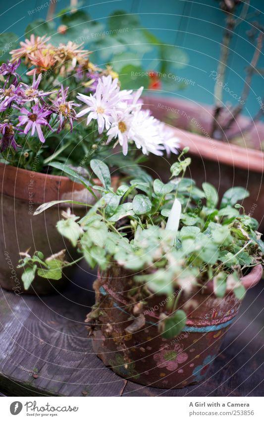 still going strong Blume Herbst Garten Blüte Stil elegant Wohnung Design Fröhlichkeit Tisch kaputt Häusliches Leben Dekoration & Verzierung Freundlichkeit Blühend Duft