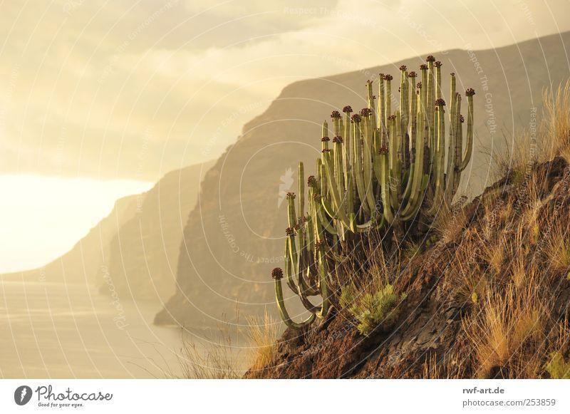 los gigantes auf teneriffa Himmel Natur Wasser Pflanze Meer Wolken Einsamkeit Umwelt Landschaft Berge u. Gebirge Gefühle Küste Luft Stimmung Erde Felsen