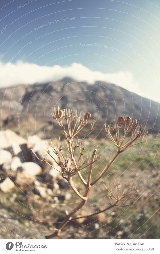 Lefka Ori Himmel Natur Pflanze Sonne Sommer Wolken Ferne Umwelt Landschaft Berge u. Gebirge Erde wandern Abenteuer Klima Sträucher leuchten