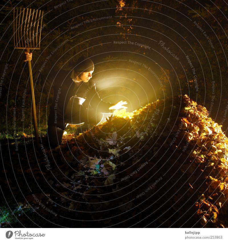 der gärtner wars Mensch maskulin Mann Erwachsene 1 30-45 Jahre Umwelt Natur Landschaft Herbst Klima Nebel Pflanze Baum Blatt Garten Park Wiese Wald berühren