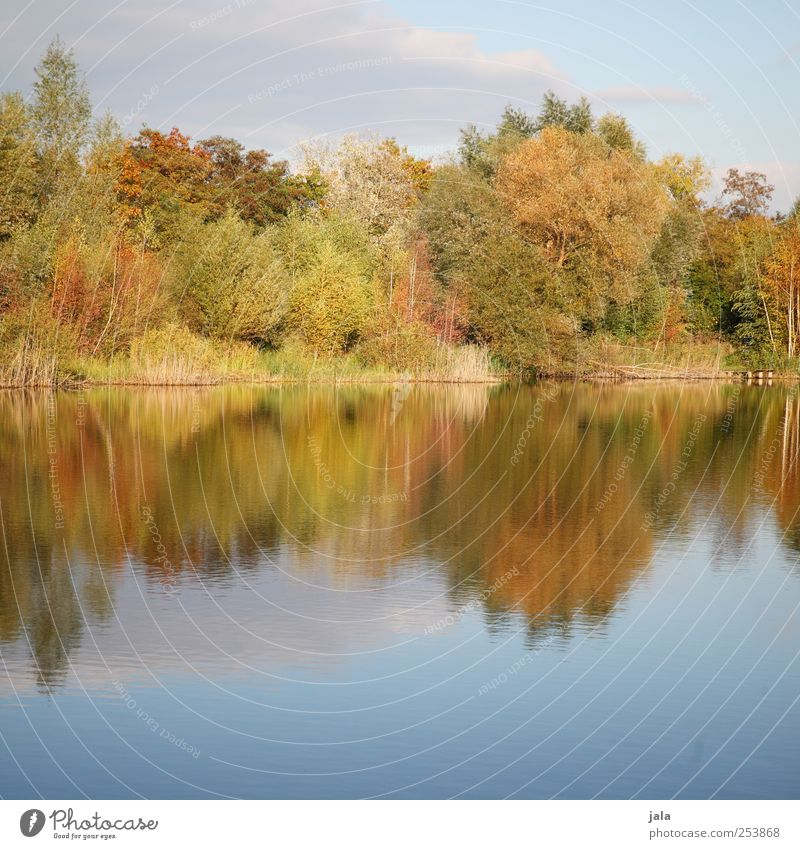 draußen am see Umwelt Natur Landschaft Pflanze Wasser Himmel Herbst Baum Sträucher Grünpflanze Wildpflanze See natürlich Farbfoto Außenaufnahme Menschenleer