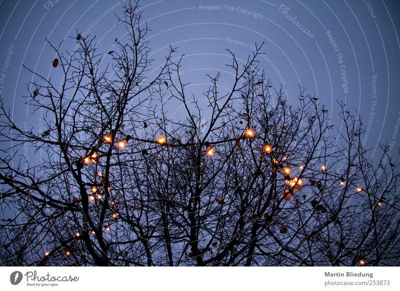 Lichterkedde blau Weihnachten & Advent Baum schwarz gelb dunkel Beleuchtung Ast dünn Geäst Vignettierung Lichterkette laublos