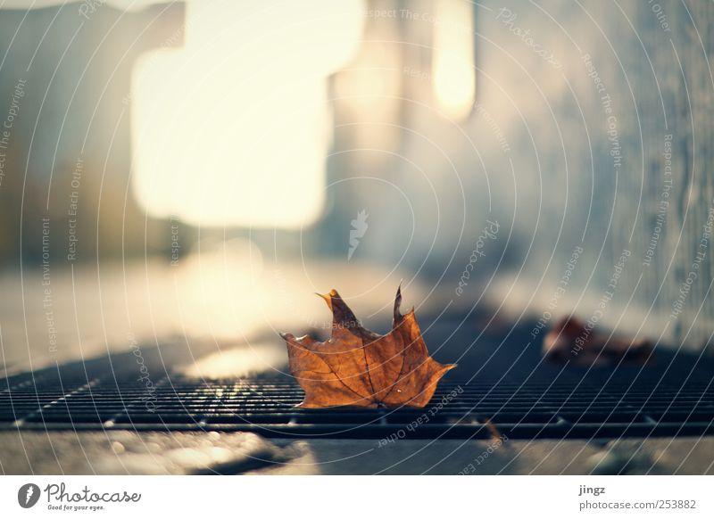 Another leaf Herbst Blatt Menschenleer klein braun gelb Einsamkeit Unschärfe Farbfoto Außenaufnahme Textfreiraum oben Freisteller Abend Dämmerung Licht