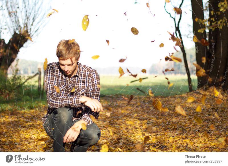 blättermeer Mensch Natur Jugendliche Baum Blatt ruhig Erwachsene gelb Herbst Glück gold maskulin frei 18-30 Jahre Hemd Schönes Wetter