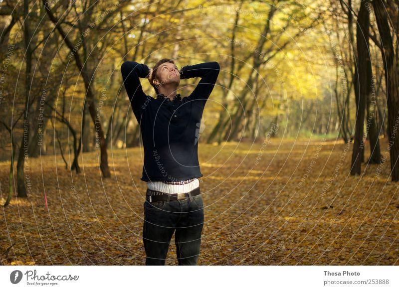 there´s a light up ahead Natur Baum Blatt ruhig Herbst Umwelt Wetter Zufriedenheit gold Herbstlaub Lichtspiel herbstlich