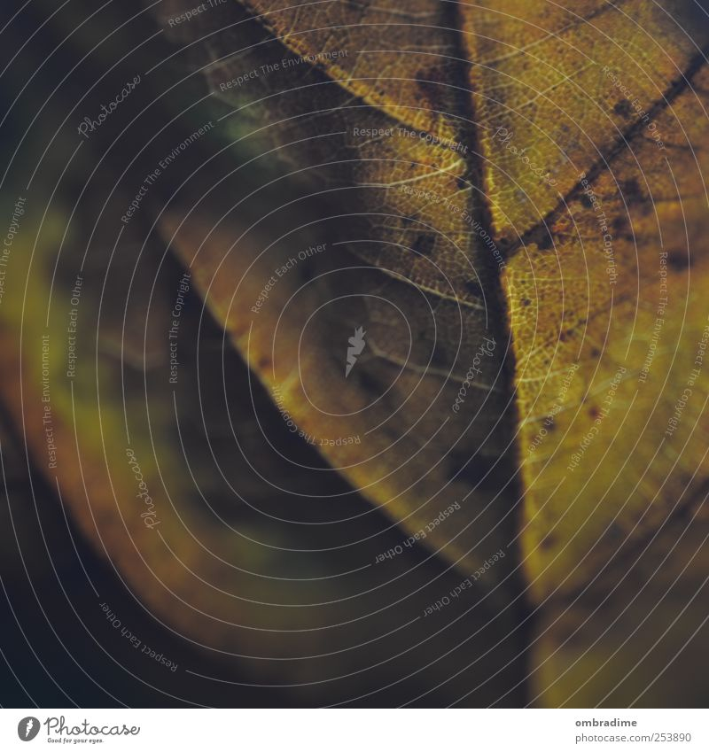 Herbstmakro III Umwelt Natur Pflanze Urelemente Klima Wetter Dürre Blatt Park braun mehrfarbig gelb gold grün Farbfoto Gedeckte Farben Außenaufnahme