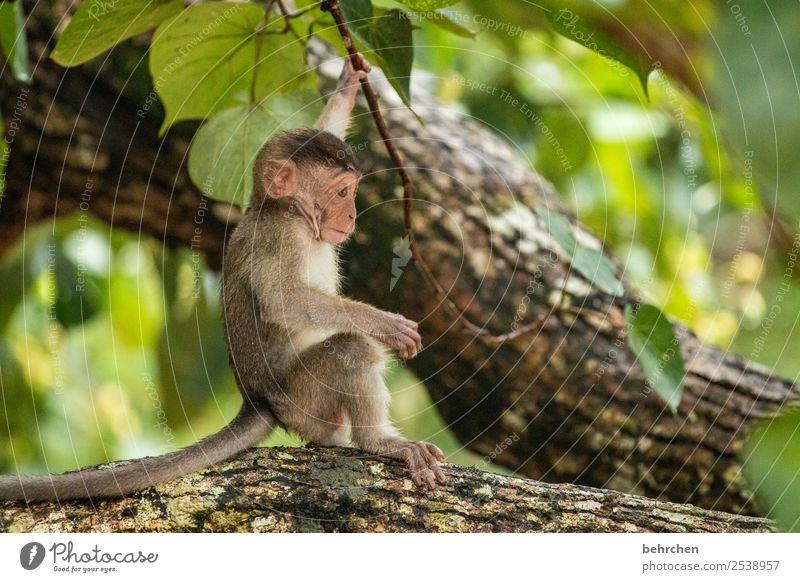besonders Ferien & Urlaub & Reisen Natur Baum Tier Einsamkeit Ferne Tierjunges Traurigkeit klein Tourismus außergewöhnlich Freiheit Ausflug träumen Wildtier