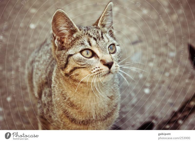 Wo ist das Vögelchen? Tier Haustier Nutztier Katze Fell 1 Tierjunges beobachten sitzen schön Neugier niedlich klug weich braun Vorfreude Tierliebe Interesse