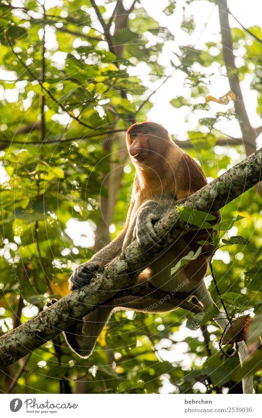 man sollte immer einen guten riecher haben;) Natur Ferien & Urlaub & Reisen schön Baum Erholung Tier Wald Ferne Tourismus Freiheit außergewöhnlich Ausflug