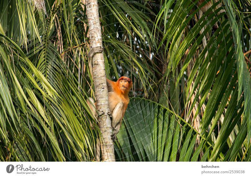 suchend | FERNWEH Ferien & Urlaub & Reisen Natur Baum Tier Blatt Ferne Umwelt Tourismus außergewöhnlich Freiheit Ausflug Wildtier Abenteuer fantastisch Asien