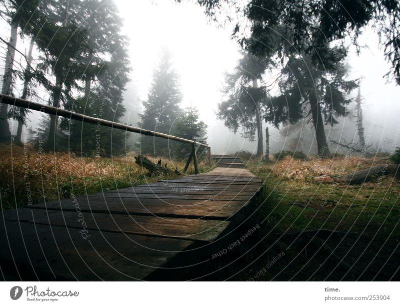 Lebenslinien #35 Freizeit & Hobby wandern Klettern Bergsteigen Umwelt Natur Pflanze Himmel Nebel Baum Wald Wege & Pfade Holz nass Steg Geländer Brückengeländer