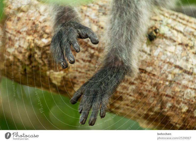füßeln Ferien & Urlaub & Reisen Tourismus Ausflug Abenteuer Ferne Freiheit Baum Urwald Wildtier Fell Affen Tierfuß Zehen 1 außergewöhnlich exotisch fantastisch