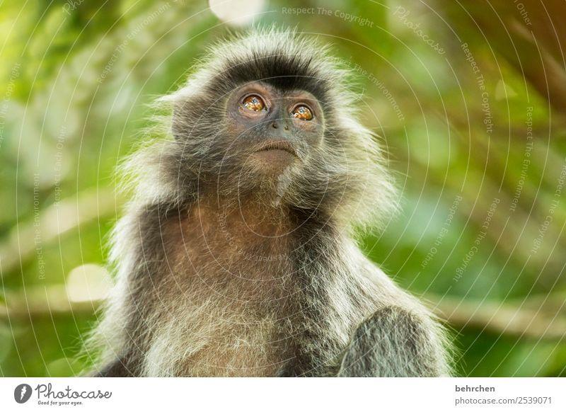 wirds heut noch regnen? Ferien & Urlaub & Reisen Natur schön Tier Ferne Auge Tourismus außergewöhnlich Freiheit Ausflug Wildtier Abenteuer fantastisch niedlich