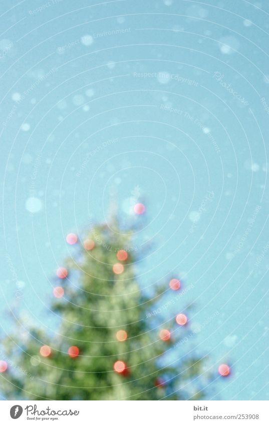Weihnachtsrausch Umwelt Himmel Winter Klima Eis Frost Schnee Schneefall Baum fallen glänzend kalt blau grün rot Weihnachtsbaum Christbaumkugel Schneeflocke